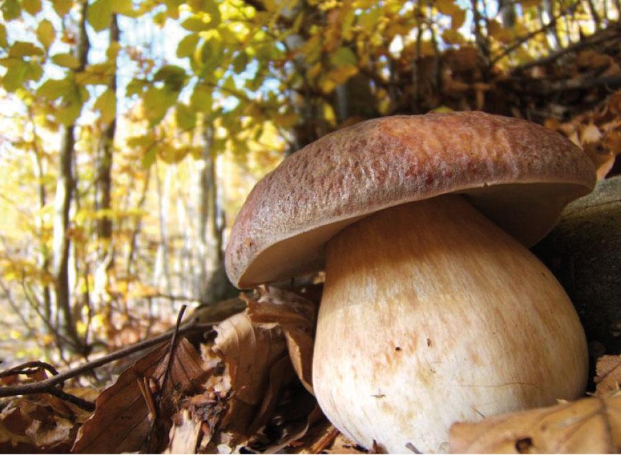 Funghi sull'Amiata